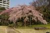 koisikawasakura_023pb